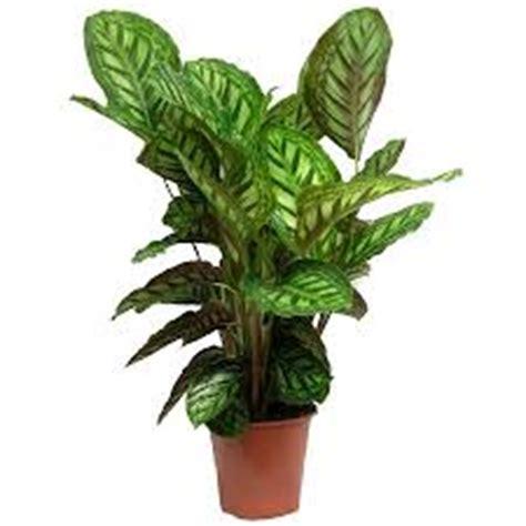 Quelle Plante Pour Une Chambre by Crea Vegetal Les Plantes Dans Une Chambre