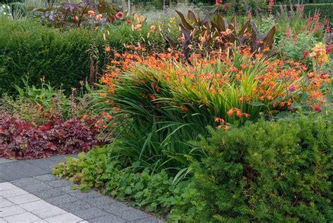 bulbi da fiore perenni bulbi estivi e piante perenni effetto vincente bonvivre