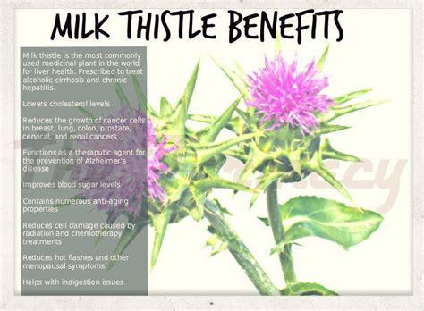 Milk Thistle For Detox Thc by 537278 566516496702121 735442379 N Drjockers