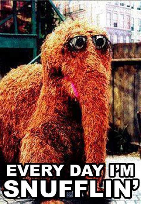 Funny Everyday Memes - sesame street meme