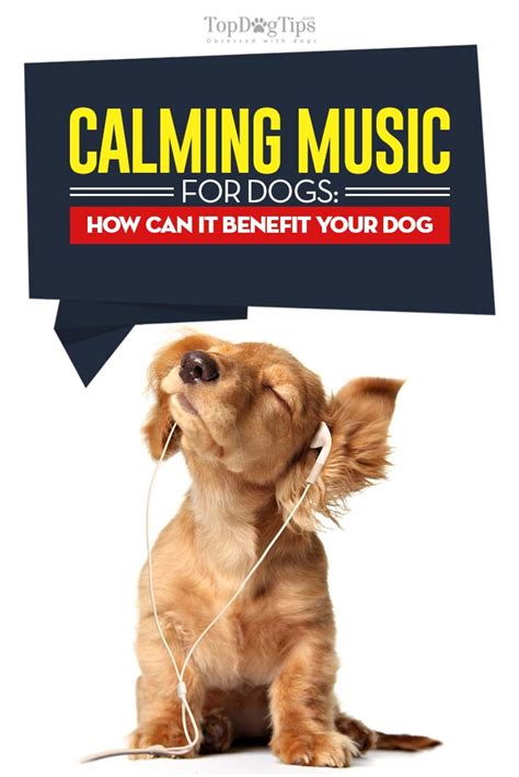 soothing sounds for dogs calming for dogs what is it and how can it benefit your