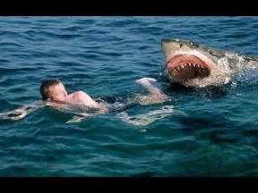 great white shark attacks caught on tape wildlife
