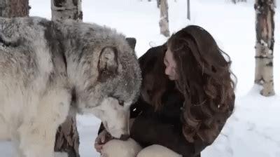 Tshirt Natgeo Wildlife timber wolf cuddles up with wildlife worker showers