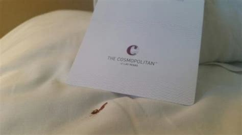 bed bugs las vegas cosmopolitan bed bugs picture of the cosmopolitan of