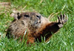 groundhog day meaning dictionary celebrating groundhog day dictionary