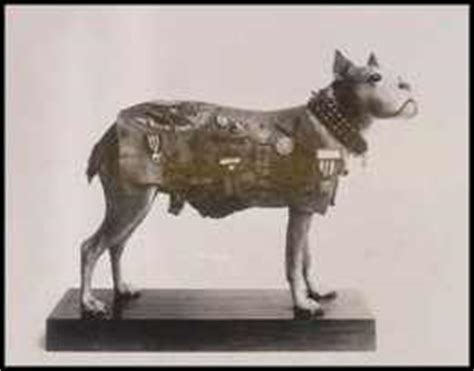 How Sergeant Stubby Died World War I