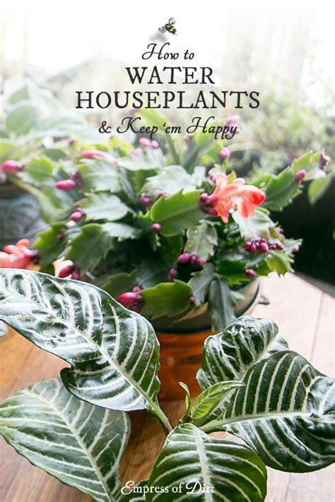 water  houseplants empress  dirt