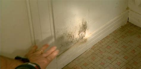 mold in bedroom closet mold and mildew prevention and removal for your home