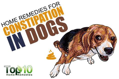 puppy constipation home remedy home remedies for constipation in dogs top 10 home remedies