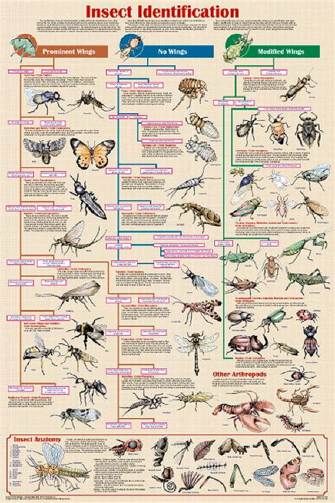 species chart insect identification chart helps to identify insects