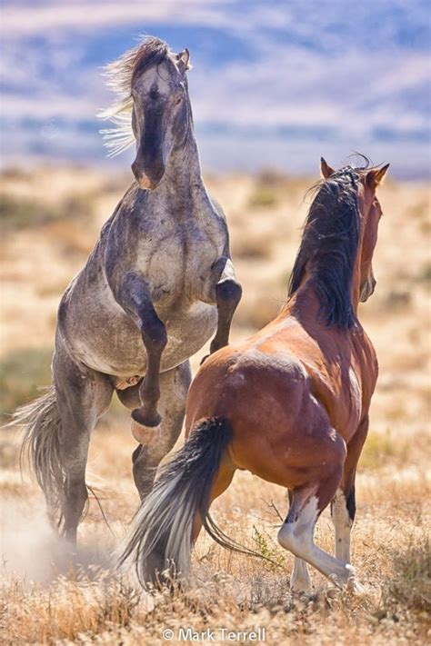 pictures of mustang horses 25 best ideas about mustang horses on pretty