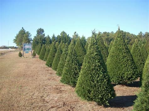 drought causes challenges for kansas christmas tree