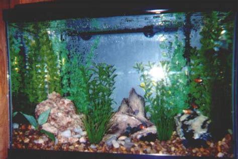 quartz aquascape quartz aquarium