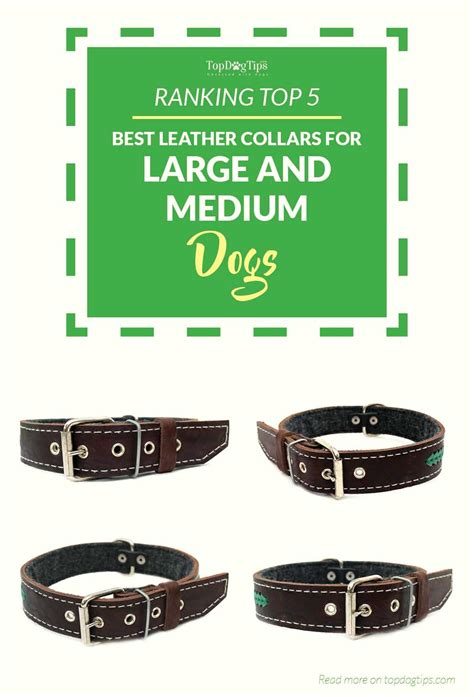 best collars for dogs top 5 best leather collars for big dogs and medium breeds