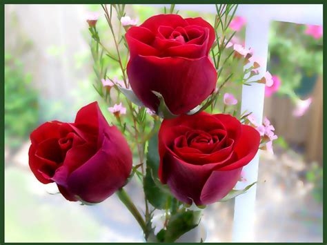 flower ke wallpaper download 90 wedding red rose flower wallpapers love roses pictures