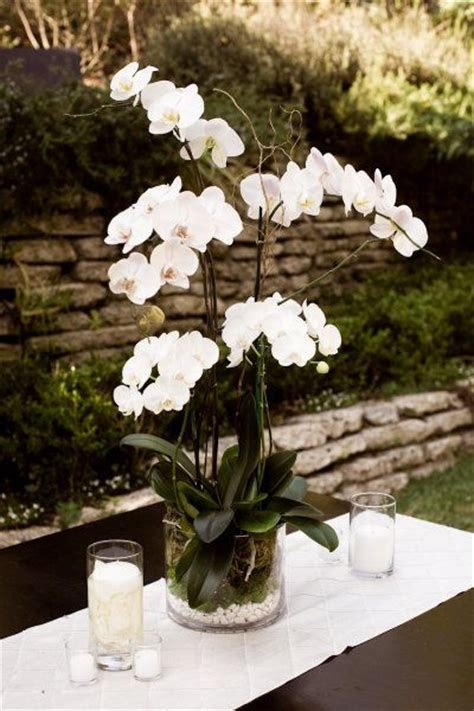 Phalaenopsis Orchid Centerpiece Planning Our The World S Catalog Of Ideas