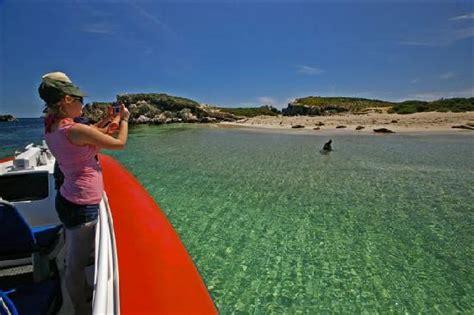 glass bottom boat tour rockingham visiting seal island on the shoalwater safari cruise