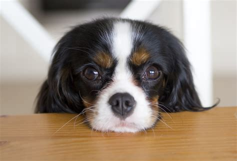 eye contact with dogs eye to eye contact with your enhances bonding by upping oxytocin says science