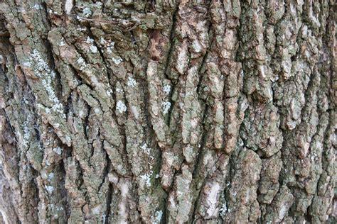 ruff ruff really tree bark wood free texture www myfreetextures 1500 free