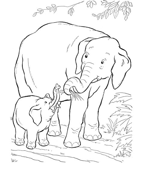 african animals coloring pages az coloring pages