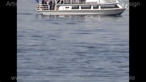 killer whale attacks fishing boat killer whale attacks people on boat youtube