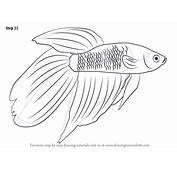 Step By How To Draw A Siamese Fighting Fish