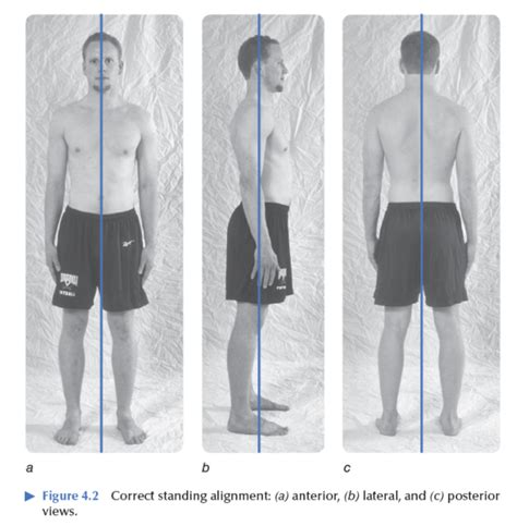 Plumb Line Assessment by Correctly Examine Posture