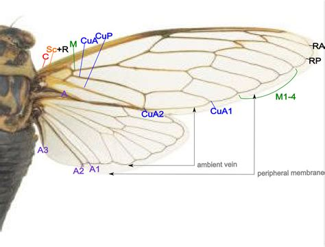 wing diagram wings seaside and insects on