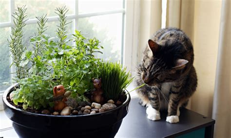 indoor plants for cats how to make an amazing diy indoor cat garden the anti