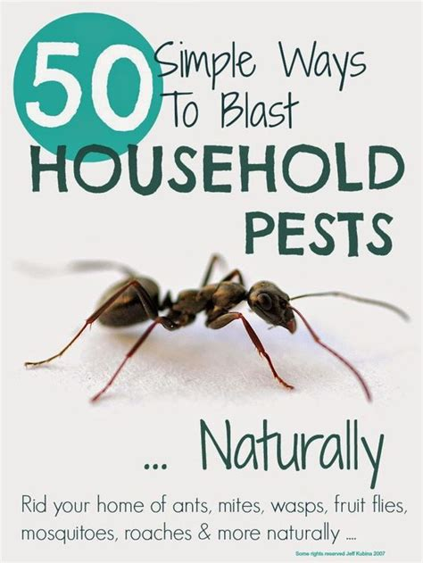 7 Ways To Get Rid Of Dust Mites by How To Get Rid Of Ho Kill Dust Mite