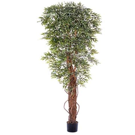 Overstock Trees - 7 foot ruscus tree potted overstock 1859 flowers royale