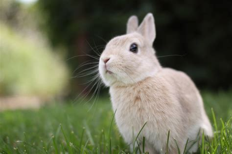 Cute Rabbit Hd Wallpaper | cute rabbit wallpapers rabbit desktop wallpapers 1080p