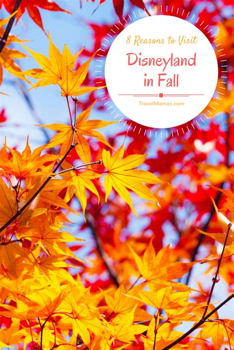 8 Reasons To Fall In Again After A Divorce by 8 Reasons You Should Visit Disneyland In Fall