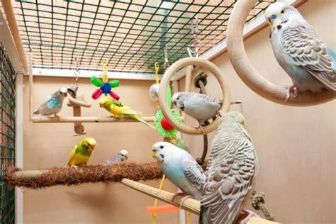 gabbie per pappagalli inseparabili gabbie per pappagalli guida alla scelta tutto ze