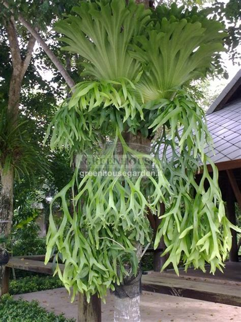 piante ricadenti da interno ricadenti