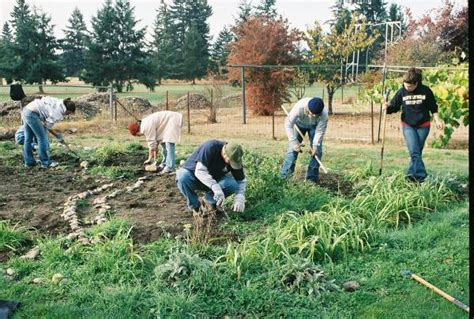 What Is A Community Garden by File Community Garden Jpg