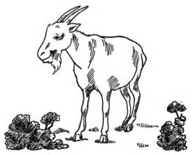 realistic goat coloring page goat at garden coloring page free printable coloring pages