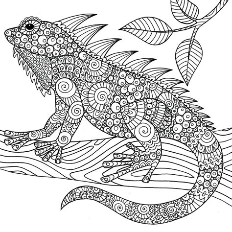 lizard coloring pages for adults wonders of creation illustrations to coloring and inspire