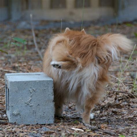 dumb dogs dumb dogs william beem