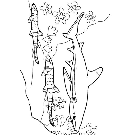 basking shark coloring page basking shark coloring page animals town animals color