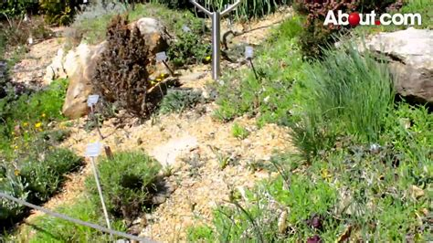 How To Make Rock Garden How To Build A Rock Garden Qtiny