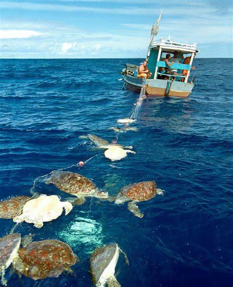 pesci volanti mediterraneo il mare lo stiamo uccidendo noi