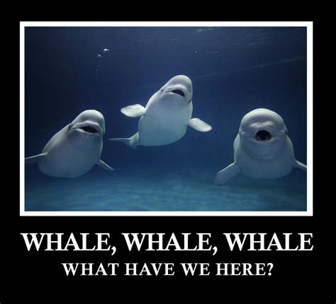 Oh Whale Meme - do animals have accents if i m asking the question you