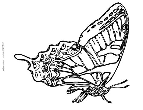 Black And White Coloring Pages Of Butterflies | free coloring pages of swallowtail