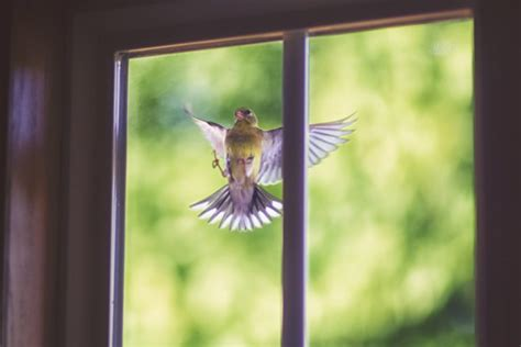 how to stop wild birds hitting your windows animal talk
