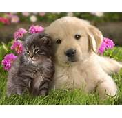 Cool Animals Pictures Kittens And Puppies