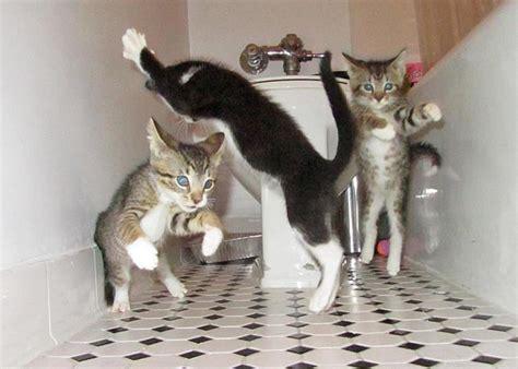 Dancing Cat Meme - funny cats dancing 5 free hd wallpaper funnypicture org