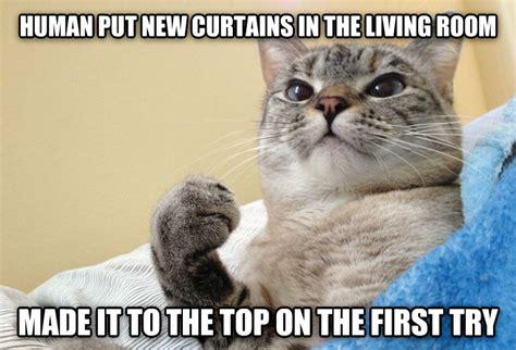 The Living Room Or Not Cat Livememe Success Cat