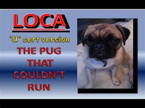 the pug who couldn t run loca the pug g or u version quot the pug that couldn t run quot