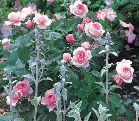 Mein Schöner Garten 3367 mein sch 246 ner garten pflanzen pflege